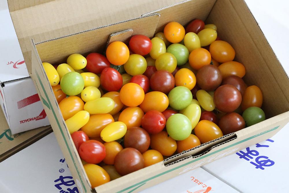 高糖度ミニトマト