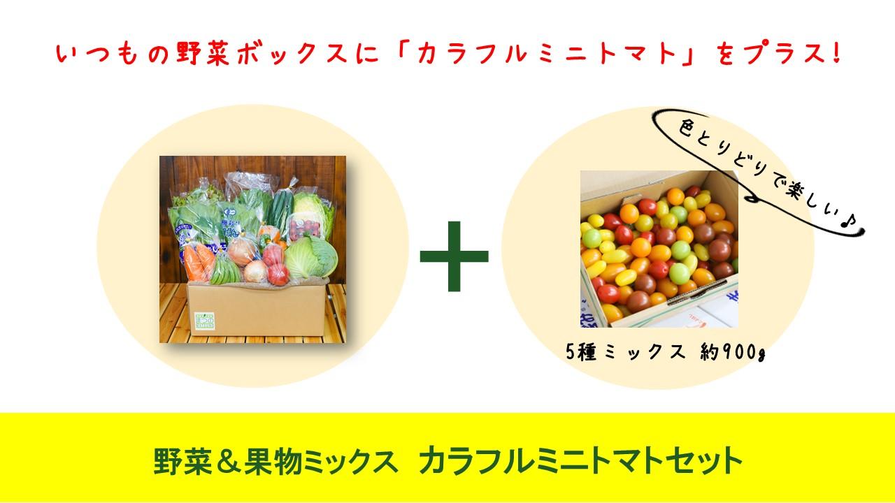 カラフルミニトマトセット